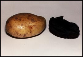 "... thrice baked potato"" shown here with a potato baked for only a"